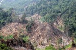 An aerial view of forest destruction of Gunung Leuser National Park on March 21, 2016 in Aceh, Indonesia.