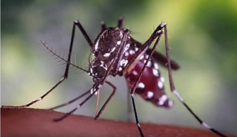 Malaria, a life threatening disease that killed more than 400,000 people can now be controlled in Africa through vaccination.