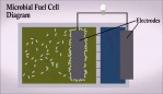 Electrifying Wastewater: Using Microbial Fuel Cells to Generate Electricity