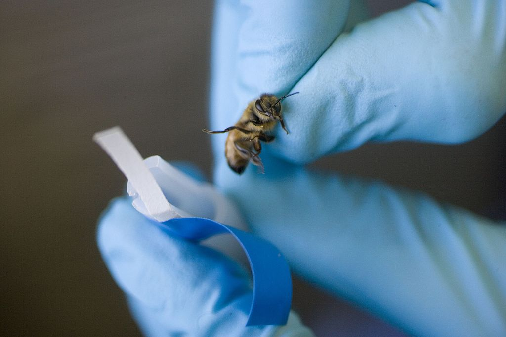 Scientists Rake Benefits from the Bees with their Sense of Smell to Seek Out Terrorist Weapons