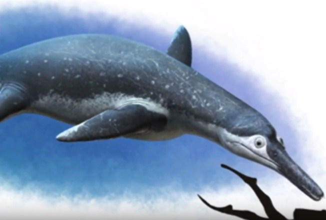 The fossil of the creature was said to belong to the pliosaurs family and is named as Luskhan itilensis.