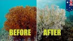 Great Barrier Reef Experiencing Coral Bleaching, UNESCO's intense concern