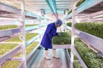 Hydroponic Farming in Alaska Boosts its Economy as well as in other Countries