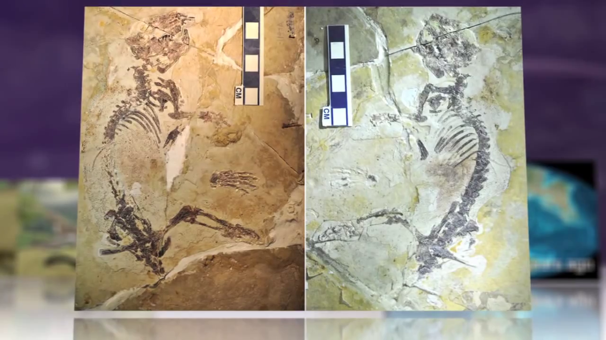 History's Most Successful Mammal Unearthed in China