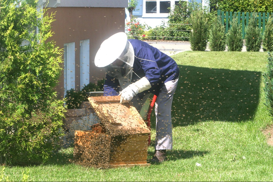 Honey bees are potential species that could eradicate bacteria that are resistant to antibiotics.