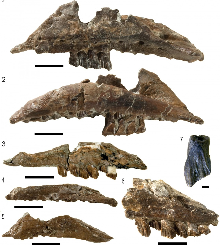 Galleonosaurus dorisae new species