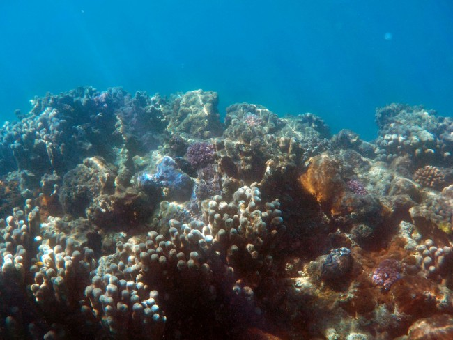 low- light coral reefs