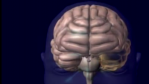 Parkinsons Disease and Dopamine